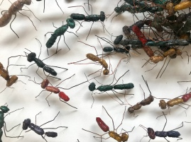"""Perhaps ants, plants and the like will provide inspiration for 'vegetal' models of practice based on community and commitment. Kofi Dawson, """"Nohanoha"""" (""""Sugar Ants"""") (2003-2019)."""